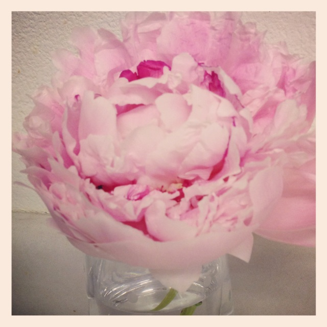 Clipped peonies from my bush