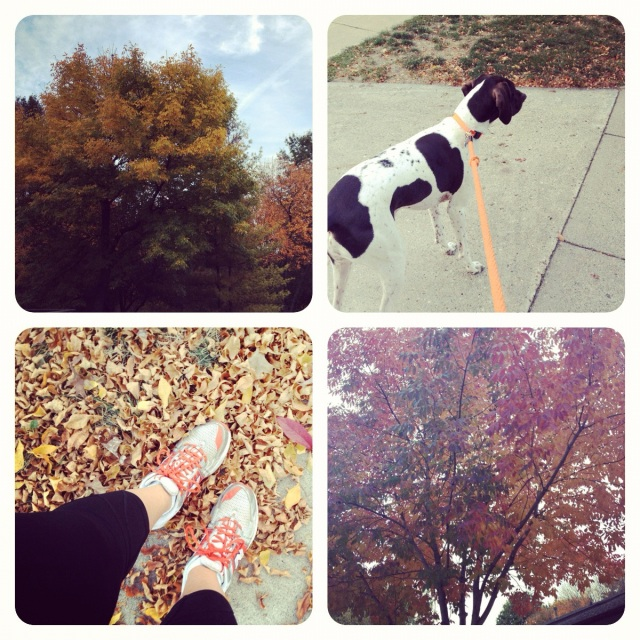 Went for a run and then took Karl for a walk to check out the colorful foliage