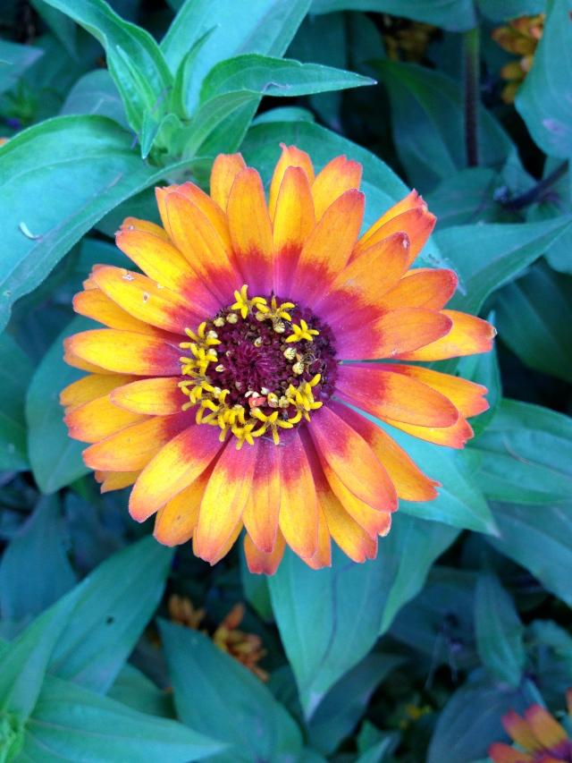 fair grown florals