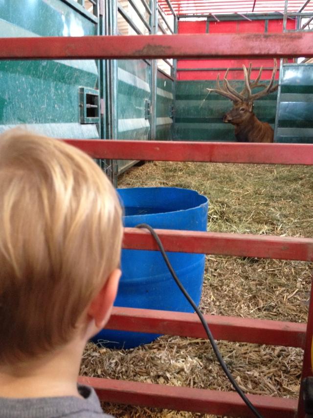 Evie meets Elk