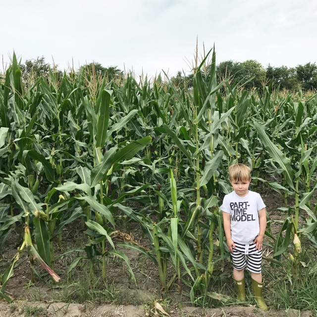 Corn Fields + Ev